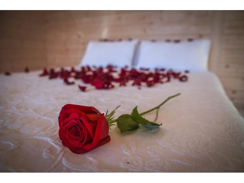 Rosa y Pétalos sobre la cama